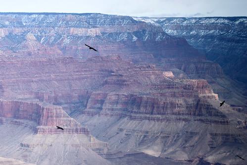 Ravens' Flight