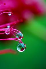 Rain drops (drops #1)