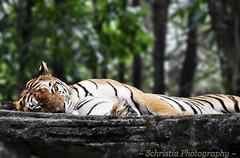 Nap Time Kitty (DSC_0035)