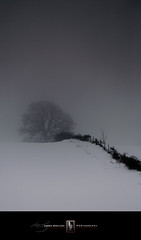 Two Miles Too (Loren Zemlicka) Tags: winter blackandwhite bw mist snow tree nature field fog wisconsin rural fence landscape photography photo midwest december image bare country picture explore minimalism 2008 oaktree baron evansville fenceline canoneos5d flickrexplore canonef100400mmf4556lisusm rockcounty lorenzemlicka