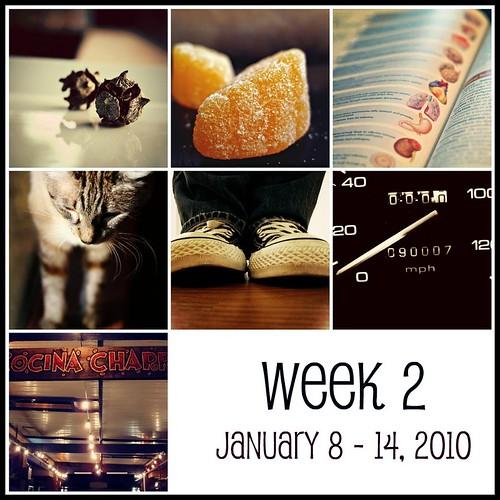 Week 2  (365:2010)