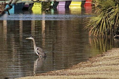 I bet this heron was COLD