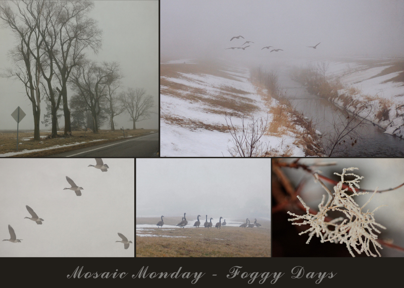 Mosaic Monday - Foggy Days