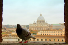 The Essence of Rome (Bo AhmaD) Tags: vatican rome roma cathedral pigeon vaticano stpetersbasilica boahmad 37washere