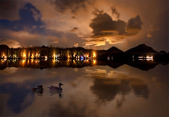 Sometimes Dreaming is Better then Believing (Philerooski) Tags: trees light sky baby lake distortion reflection night clouds washington amazing digitalart mother ducks wa diamondlake nadahdr