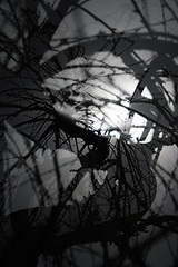 Sakura willow undulates - weeps for thee (bijoubaby) Tags: longexposure winter shadow bw moon tree texture silhouette corner naked cherry four for blackwhite memorial soft artist dof zoom you shaped rip 4 curves sixwordstory s line willow seven indie trunk mementomori sakura blkwht xs cry curve independence shape sws curved cries thee weep linear sx undulating autonomy curving asis weeps sevenyears undulate takeapicture yearseven memorialtree undulates rhymeswithorange netneutrality blakwhit scottwizell takeapictureitlastslonger sevenyear matters2me bijoubabybaby itlastslonger