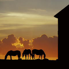 playing around with selections (Will Montague) Tags: sunset sky horse silhouette night clouds barn countryside nikon quiet bluegrass dusk kentucky equine graze montague d80 centralkentucky willmontague