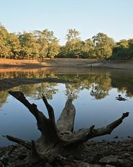 The fallen tree (nvsule) Tags: blue india lake tree water canon reflections fallen deerpark naturesfinest supershot silvassa flickrchallengegroup