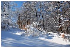 Sous bois (cumin12) Tags: wood winter panorama snow france nature landscape nikon plateau hiver knife neige knives paysage brouillard abeille vache laguiole aveyron couteau aubrac francelandscapes natureselegantshots