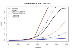 32C averages (adam coster) Tags: experiments science growth temperature yeast biology pombe jflab