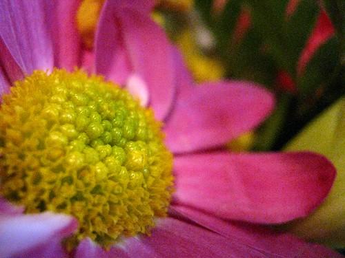 flowers 4b