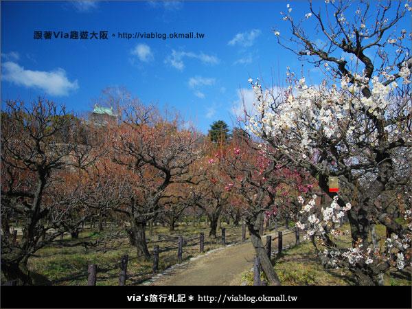 【via關西冬遊記】大阪城天守閣!冬季限定:梅園梅花盛開10