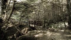 Sendero (Diego Dicarlo) Tags: light forest lumix stream path bosque sendero arroyo platinumphoto lx3