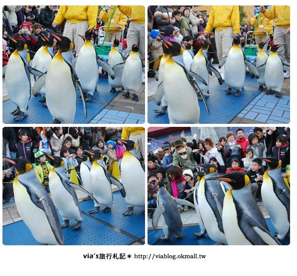 【via關西冬遊記】大阪海遊館~冬季限定!無敵可愛企鵝遊行來囉!20