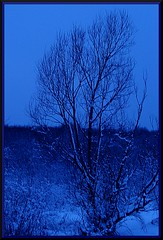 February Blues (dawn's point of view) Tags: blue winter color colour tree art monochrome dream blues explore imagine farms february 2010 winterscape dgital lansscapes theacademytreealley
