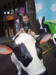 A Boy on a Cow at the Zoo