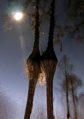 sun, upside down (octopus minor) Tags: bear wood light abstract water river flow duck florida swamp tallahassee panther refelction apalachicola indianhead neurons dendrites