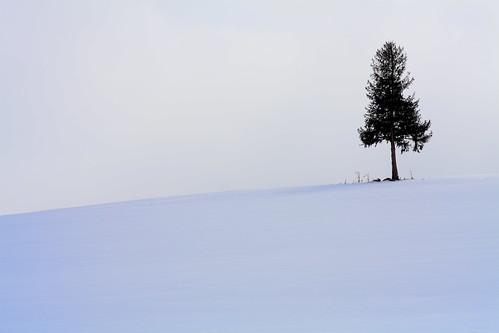???の木(名前あったかな?)