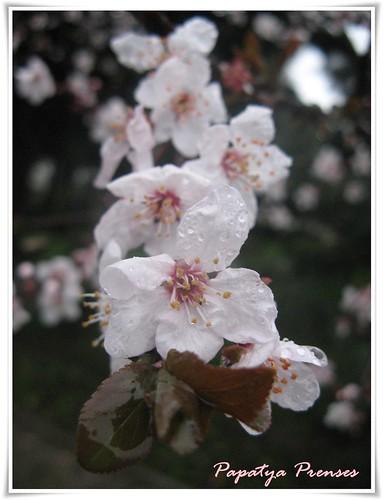 gel ey bahar.. (1)