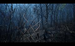 ไฟคนป่า