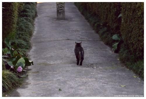 Cat 100310 #02