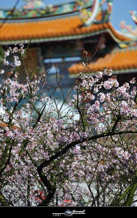 Sakura sunny 02