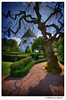 monster tree (Mariusz Petelicki) Tags: tree church island hdr bornholm dania kościół drzewo osterlars 3xp wyspa mariuszpetelicki