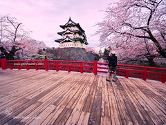 Hirosaki Castle Japan. Photographer Captures Castle.   Glenn Waters.2,100 visits to this photo.  Thank you. (Glenn Waters in Japan.) Tags: bridge flowers trees sky castle beautiful festival japan architecture clouds reflections spring nikon photographer wide explore aomori   sakura cherryblossoms hirosaki moat matsuri japon      explored  d700  nikond700  glennwaters nikkorafs1424mmf28 photosjapan