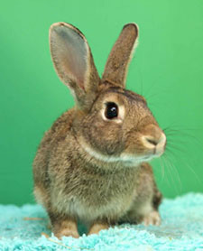 Interested in Browney? Check out the Bunny Bunch!