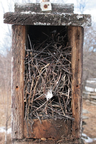 House Wren nest in nestbox