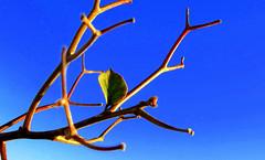 start of the spring (<Younes>) Tags: persian spring iran newyear ایران بهار nowruz عید نوروز younes 1389 یونس سالنو کلاهدوز kolahdouz