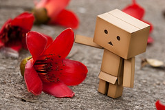 Withered wood cotton flower (Ali Tse) Tags: flower toy toys amazon withered limited  cottontree danbo bombaxceiba revoltech jfigure danboard  woodcotton