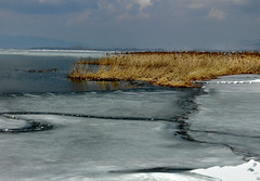 Spring on the Lake (arbyreed) Tags: lake water reeds frozen spring melting utahlake thawing iceandwater arbyreed