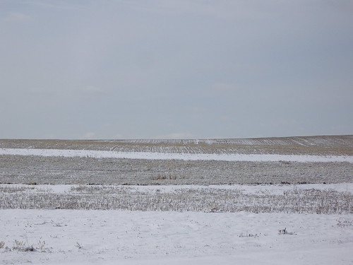 fields and snow