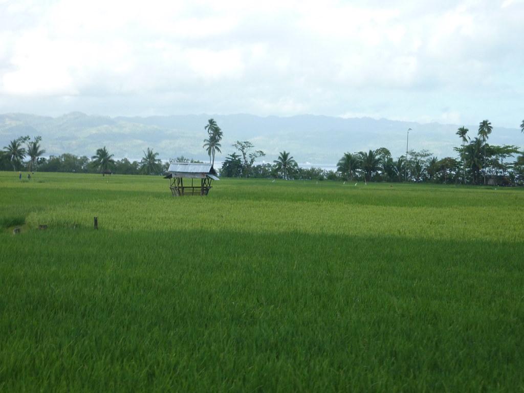 Leyte-Liloan (9)
