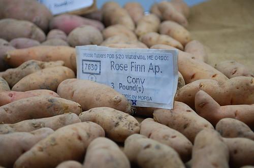 Rose Finn Seed Potatoes
