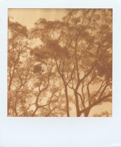PX100_Trees