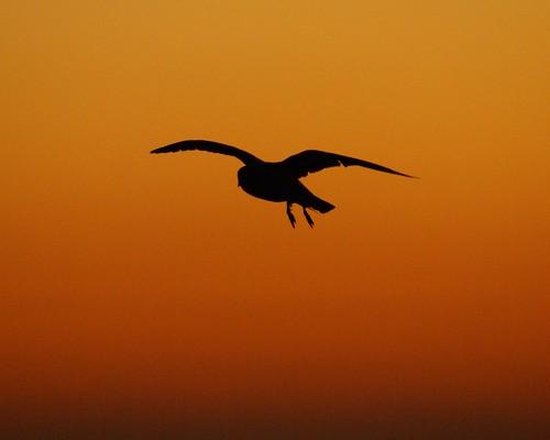 Sunrise Silhouette3
