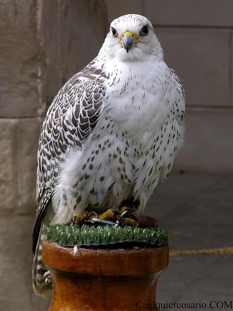 Aves extraordinarias IV