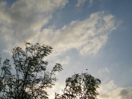 Mesquite, sky & bees