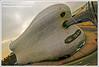 Selfridges  Building in Birmingham Kaplický's Masterpiece (davidgutierrez.co.uk) Tags: city urban building architecture buildings spectacular geotagged photography photo arquitectura birmingham cityscape image sony centre cities cityscapes center structure architectural 350 selfridges architektur sensational metropolis alpha impressive dt bullring futuresystems municipality edifice cites f4556 1118mm fineartphotos impressedbeauty kaplický sonyalphadt1118mmf4556 sonyα350dslra350
