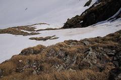 descente du verrou (m-idre31) Tags: france montagne neige avalanches hautespyrnes aragnouet gypatebarbu randonneraquettes murailledebarroude valledelagla refugedebarroude picgerbats picdelagla parcnationnaldespyrnes saxifragesafeuillesopposes