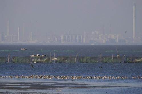 彰化海岸溼地。照片提供:蔡嘉陽