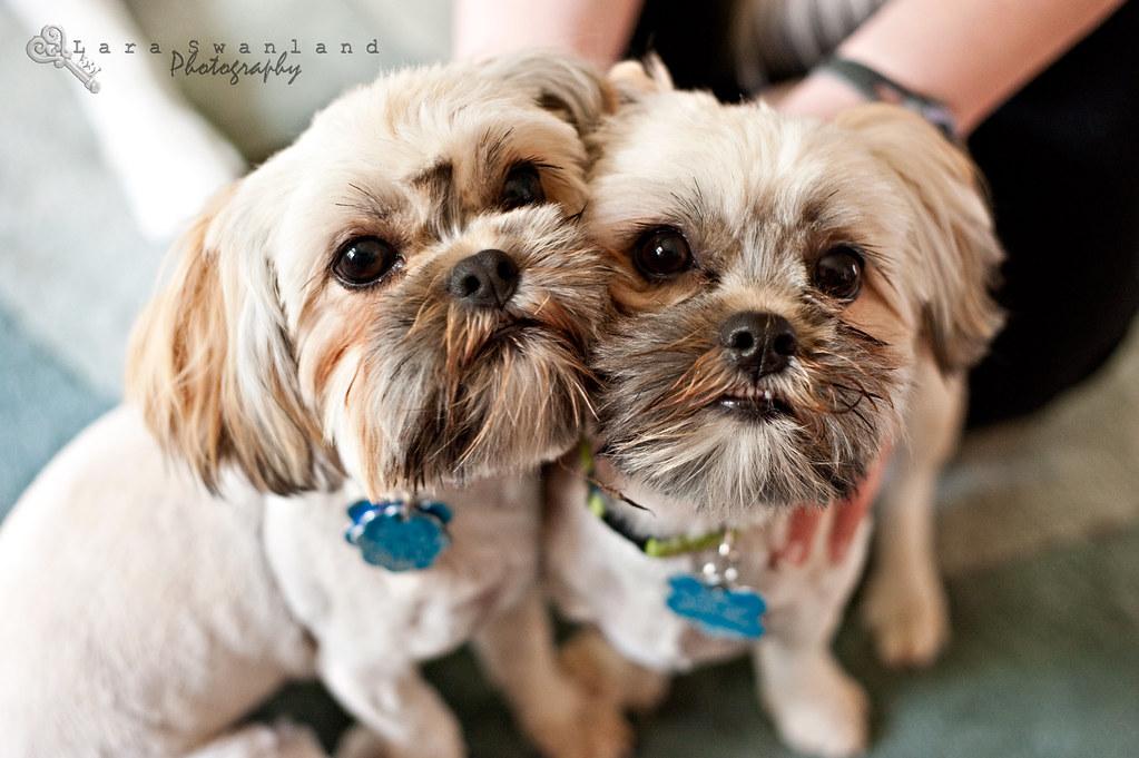 Lara-Swanland-puppies2