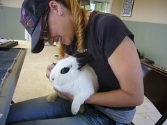 Harvest Home's Rabbit Spa Day