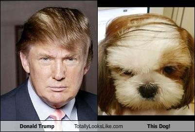 donald-trump-totally-looks-like-this-dog