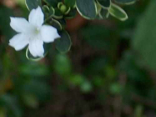 你拍攝的 風中的小白花。