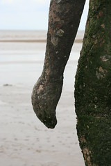 IMG_2146 (jackie*) Tags: liverpool antonygormley anotherplace crosbybeach