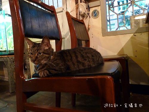 zabu 店貓2