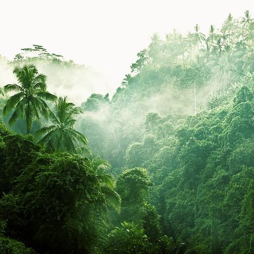 Bali / Landscape / Nature